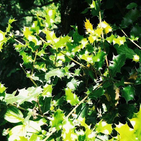 ♣ Natural Green Photography gezinti lucky pixels hd friday life photo summer sun relax golgelendirme eyes lens zevk 15.43 sun shine ♣ İnsanlar özgür olarak doğarlar.. º•º