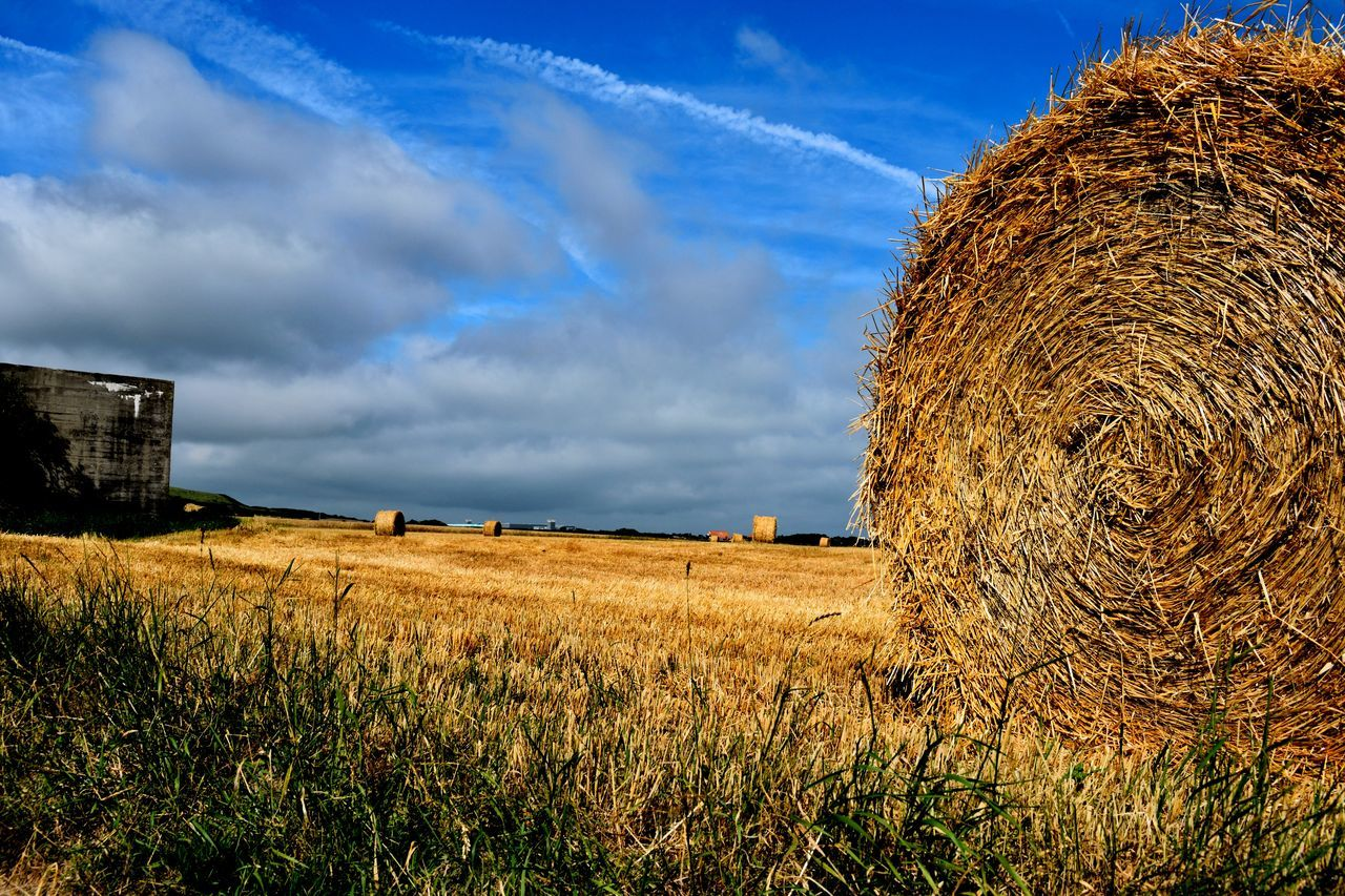 Close-Up Of Hay On Agricultural Field Against Blue Sky