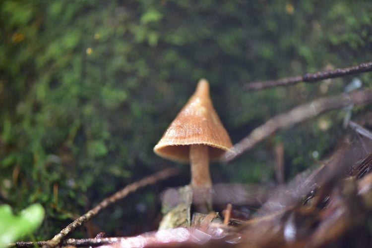 スナフ菌 スナフ菌 Fungus Plant Growth Mushroom No People Close-up Nature Tree Land Toadstool Focus On Foreground Beauty In Nature Outdoors Day Field Food Selective Focus Vegetable Plant Part Leaf