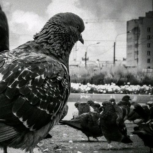 Ne baktin? Istanbul Bird Koru Park sariyer nature manzara color travel tour animal pigeon