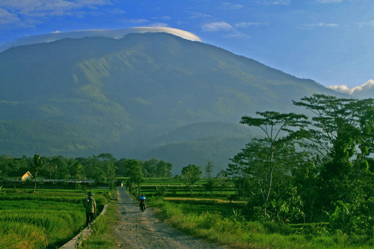 view of Mount Lawu in Ngawi East Java Indonesia Scenics - Nature Plant Mountain Landscape Environment Tree Beauty In Nature Green Color Tranquil Scene Nature Land Field Mountain Range Sky Tranquility Rural Scene Non-urban Scene Agriculture Day Grass Outdoors Farmer