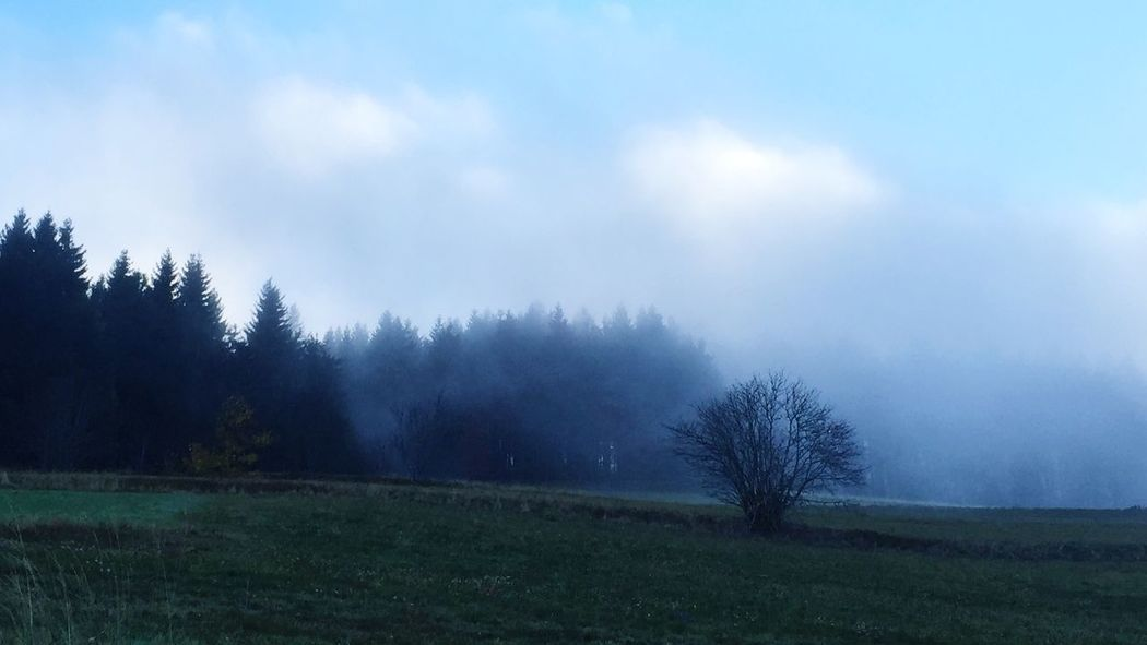 Black Forest Homeland Hotzenwald Nature At Your Doorstep