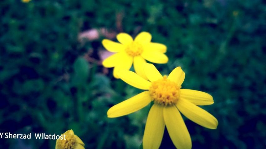 Eye4photography  Flowers EyeEm Best Shots Photoshoot Enjoying Life Photography Natuere Photos Eyem Flowers EyeEm Flower Flowers_collection Fower Flowers, Nature And Beauty Ranya Photos Around You Hello World Photo