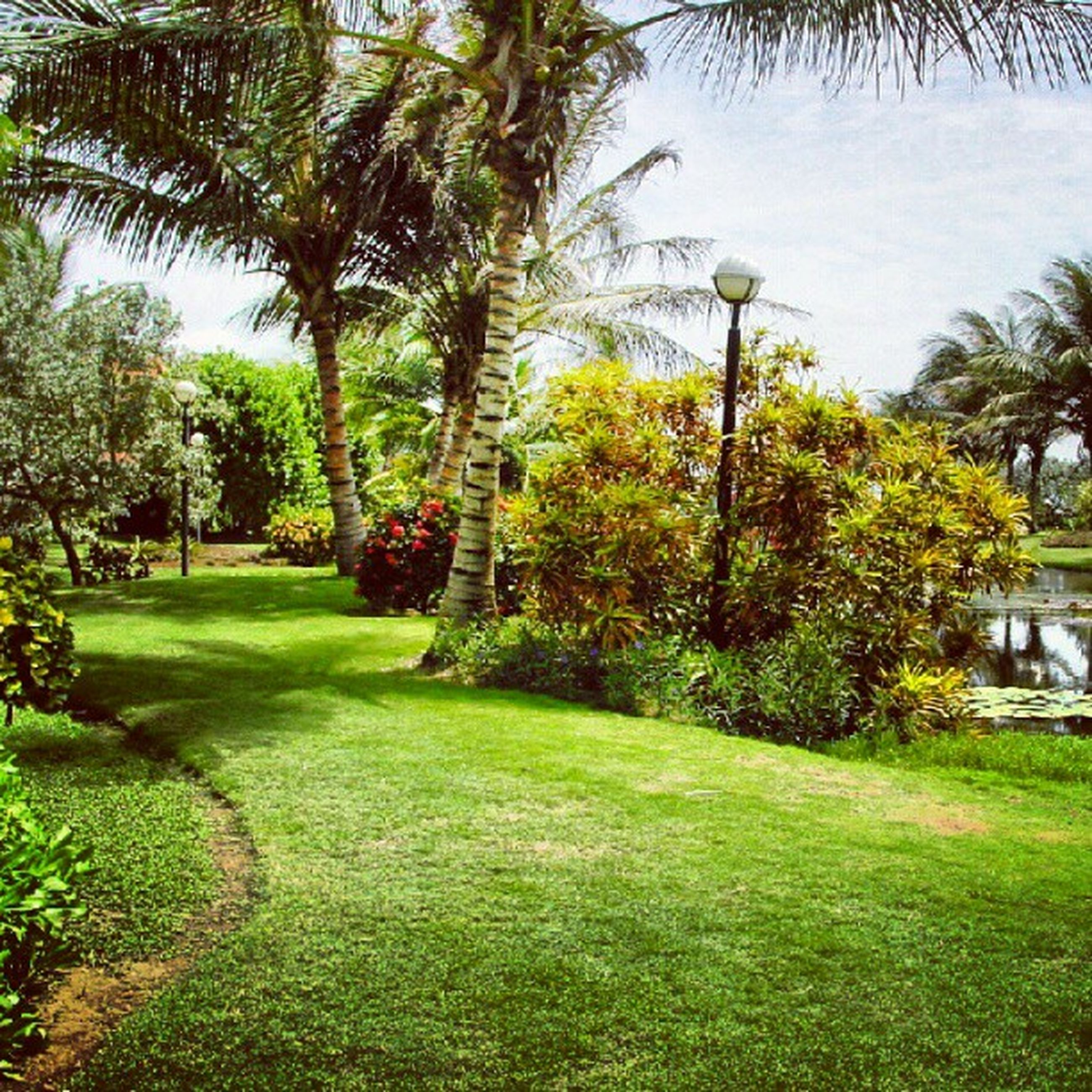 tree, green color, grass, growth, park - man made space, tree trunk, palm tree, tranquility, nature, branch, beauty in nature, tranquil scene, scenics, park, green, sunlight, lawn, sky, day, footpath