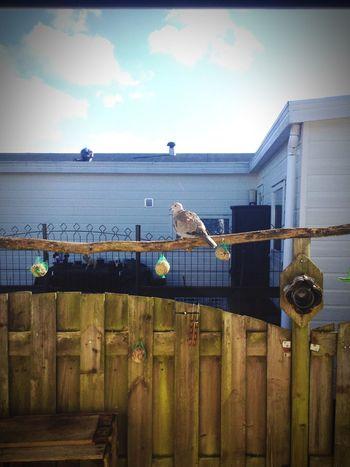 Duif Birds Food Sunny Day