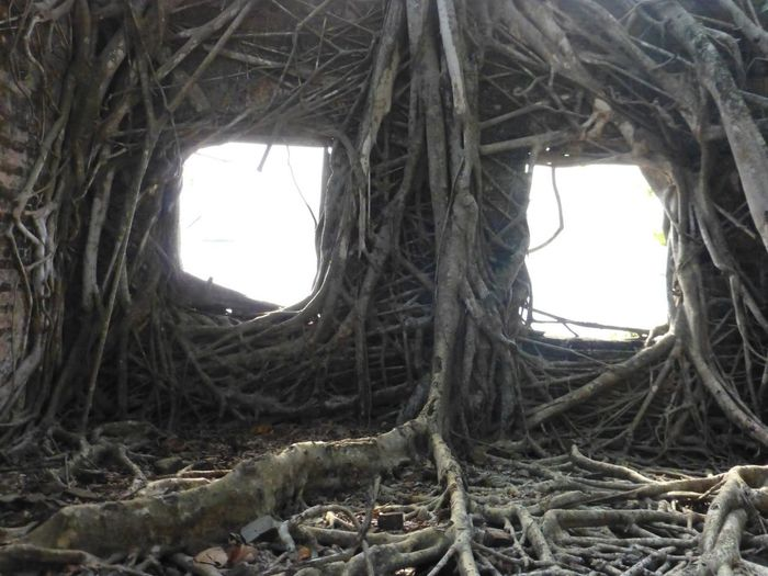 Roots Ruin Sea