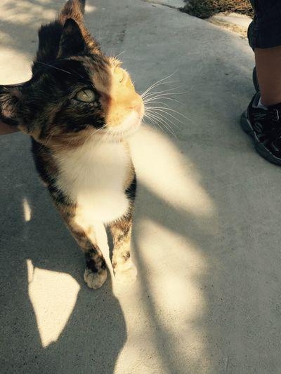 Cat😻 Catsagram meow ?????