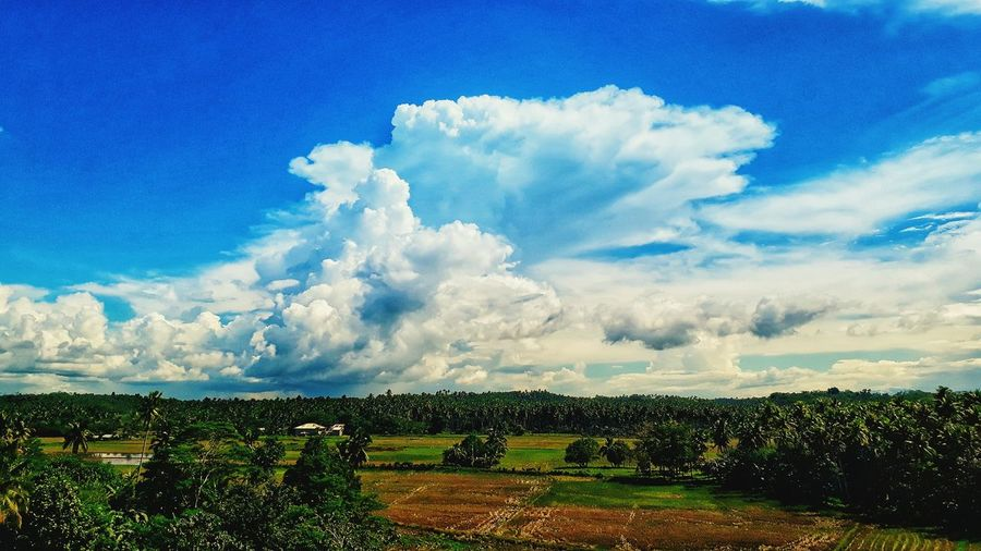 Cloud - Sky Growth Agriculture Field Sky Nature Beauty In Nature Day Outdoors Scenics No People Blue Rural Scene Flower Freshness