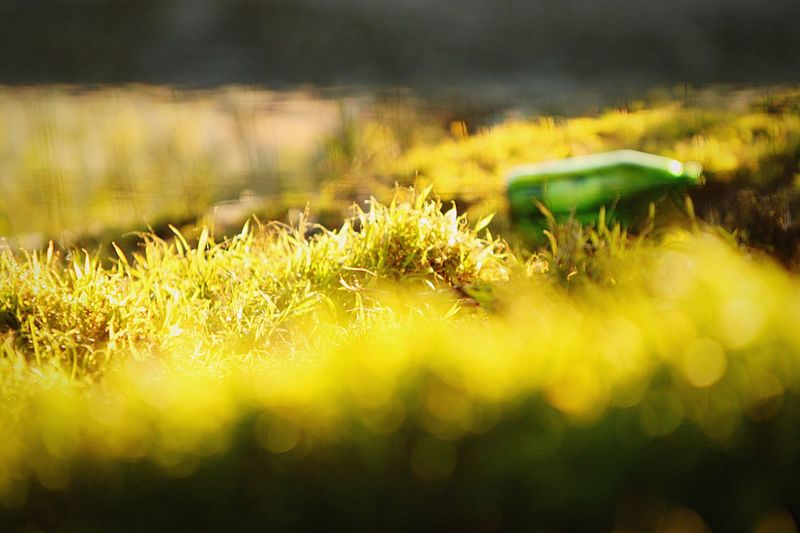 San Francisco Yellow Nature Grass Field Growth No People Plant Beauty In Nature Green Color Close-up Outdoors Day Freshness Park Travel Warm Leisure Grass Warm Colors Happiness Nature Plant Sunset Bright Colors