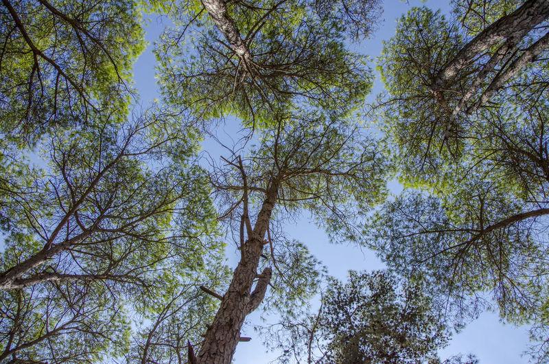Morroco Forest