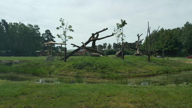 Affe Serengeti-Park, Hodenhagen