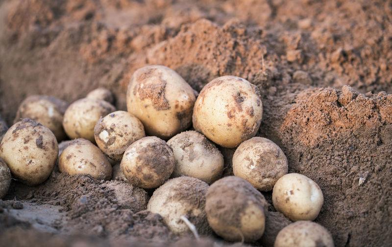 Close-up of eggs in mud