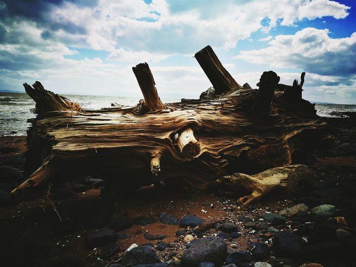 Wood Stump Cloud - Sky Outdoors Beach Day Natural Beauty