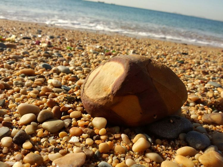 It looks like a big sweet potato! Nature Seaside
