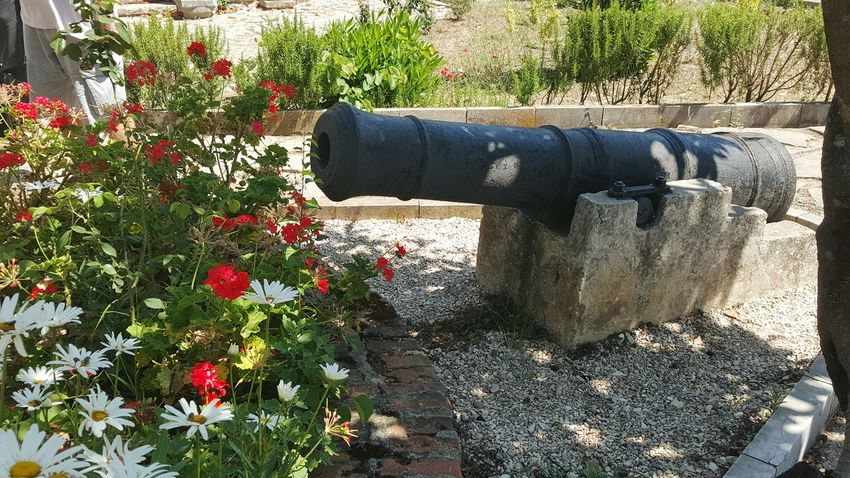 Hello World Check This Out Flowers Canon Albania Exhibition Butrint Sarande Vacation Colors