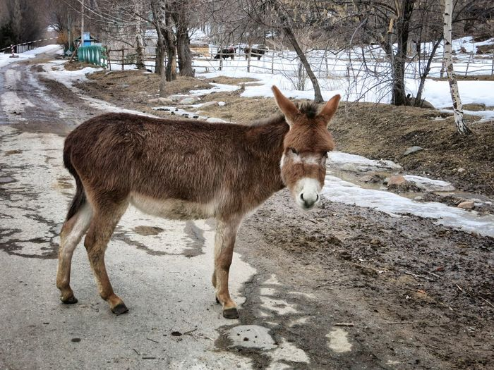 Donkey Standing On Street By Snow Covered Field