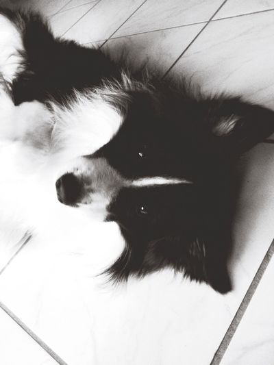 Bordercollie🐾 First Eyeem Photo