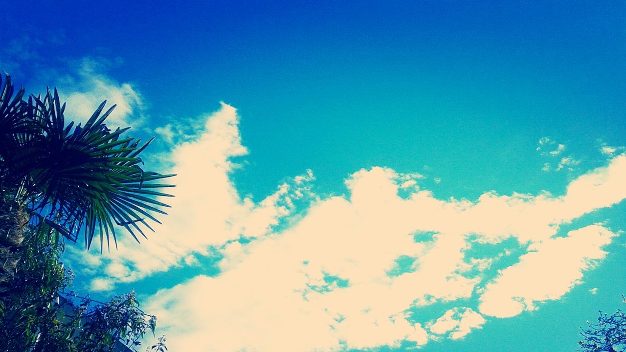 sky, low angle view, cloud - sky, blue, beauty in nature, nature, outdoors, no people, day, scenics