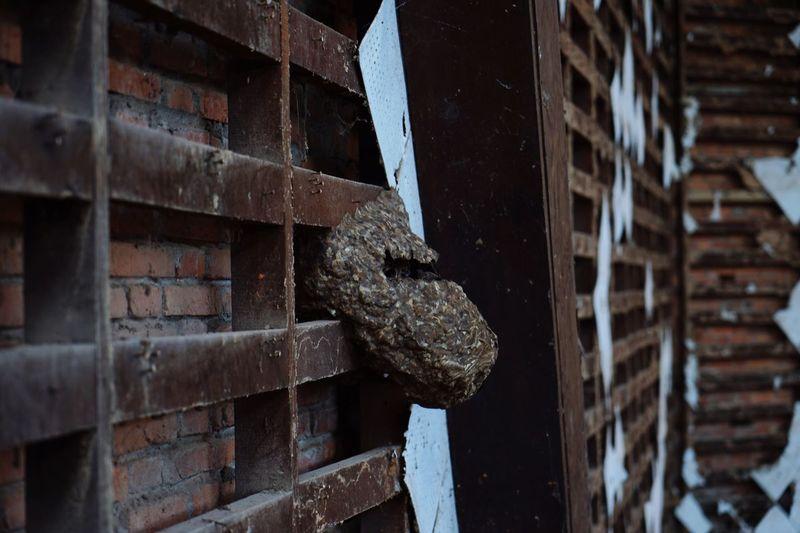 Close-up of giant hornet nest