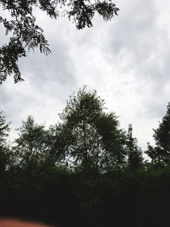 Nature Tree Cloud - Sky Sky Outdoors Nature Day Low Angle View No People Storm Cloud Beauty In Nature