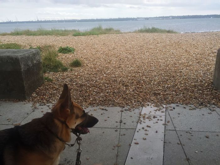 Mammal Domestic Animals Animal Themes Dog Pets One Animal Nature No People Sea Day Outdoors Sky Scenics Beauty In Nature Water Beach German Shepherd