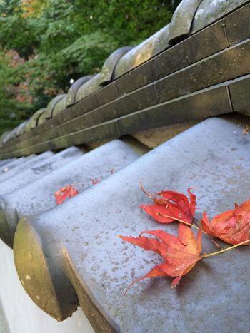 白壁と落ち葉