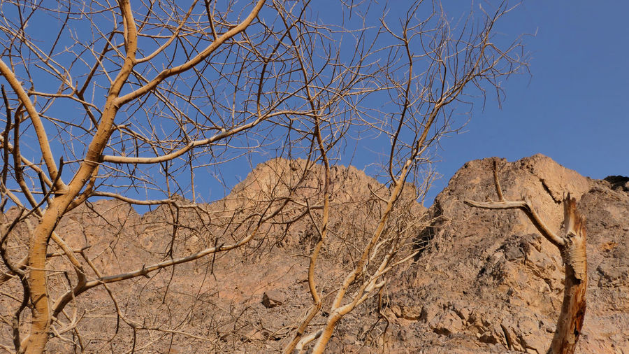 Low angle view of bare tree against clear sky