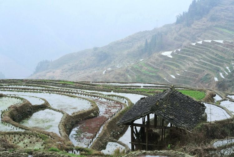 Irrigation Equipment Rice Paddy Water Terraced Field Cereal Plant Rural Scene Mountain Agriculture Rice - Cereal Plant Tree