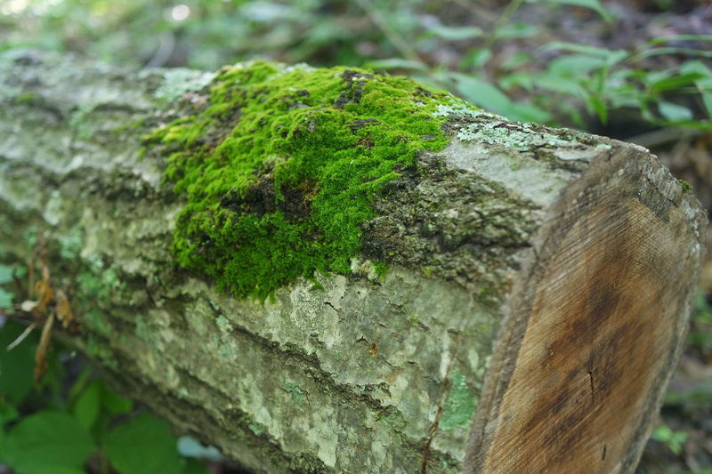 Bark Beauty In Nature Close-up Day Focus On Foreground Green Green Color Growing Growth Moss Natural Pattern Nature Nature No People Outdoors Plant Selective Focus Tranquility Tree Tree Trunk