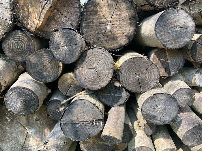 Lumber Log