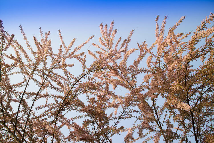 Low Angle View Plant Sky Growth No People Tree Nature Beauty In Nature Day Tranquility Clear Sky Branch Outdoors Blue Close-up Sunlight Cold Temperature Focus On Foreground Tranquil Scene Scenics - Nature