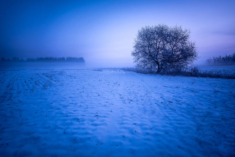 Leafless Tree White Color White Cold Dawn Sun Sunrise Morning Tree Copy Space Field Snow Frozen No People Nature Tranquil Scene Tranquility Beauty In Nature Scenics - Nature Winter Cold Temperature Sky Bare Tree Blue Landscape