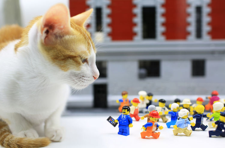 the doom to my Lego collection Giant Animal Themes Attack Cat Domestic Animals Domestic Cat Feline Lego Minifigures Legophotography Mammal Naughty Cat One Animal Pets Play Tabby Cat