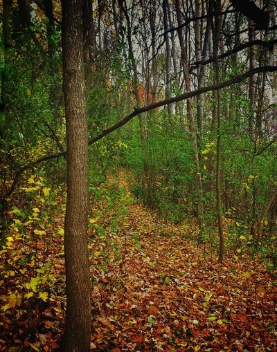 EyeEmNewHere Nature Walking Trail In The Woods The Great Outdoors - 2017 EyeEm Awards Walking Trail Outdoors Wooded Trail Wooded Path The Woods Lost In The Landscape