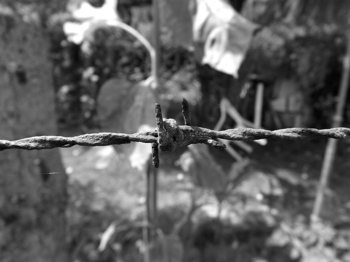Limit Restriction Fence Stop Restricted Wire Mesh Limited Blackandwhite Bw_collection Black And White