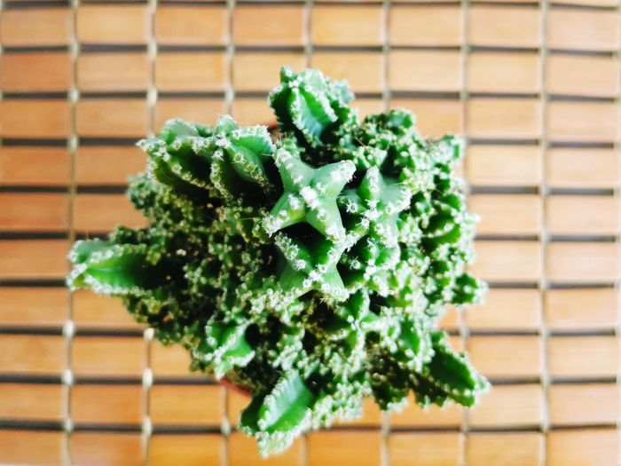Close-up of green plant on table