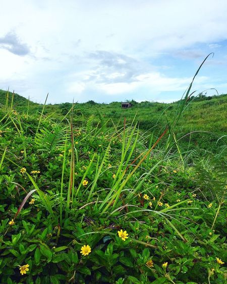 Scenery Growth Nature Field Green Color Day Sky Grass Outdoors Cloud - Sky Beauty In Nature Scenics Landscape Mountain Travel Destinations Adventure Petal Flower Osmeña Peak Cebu City, Philippines