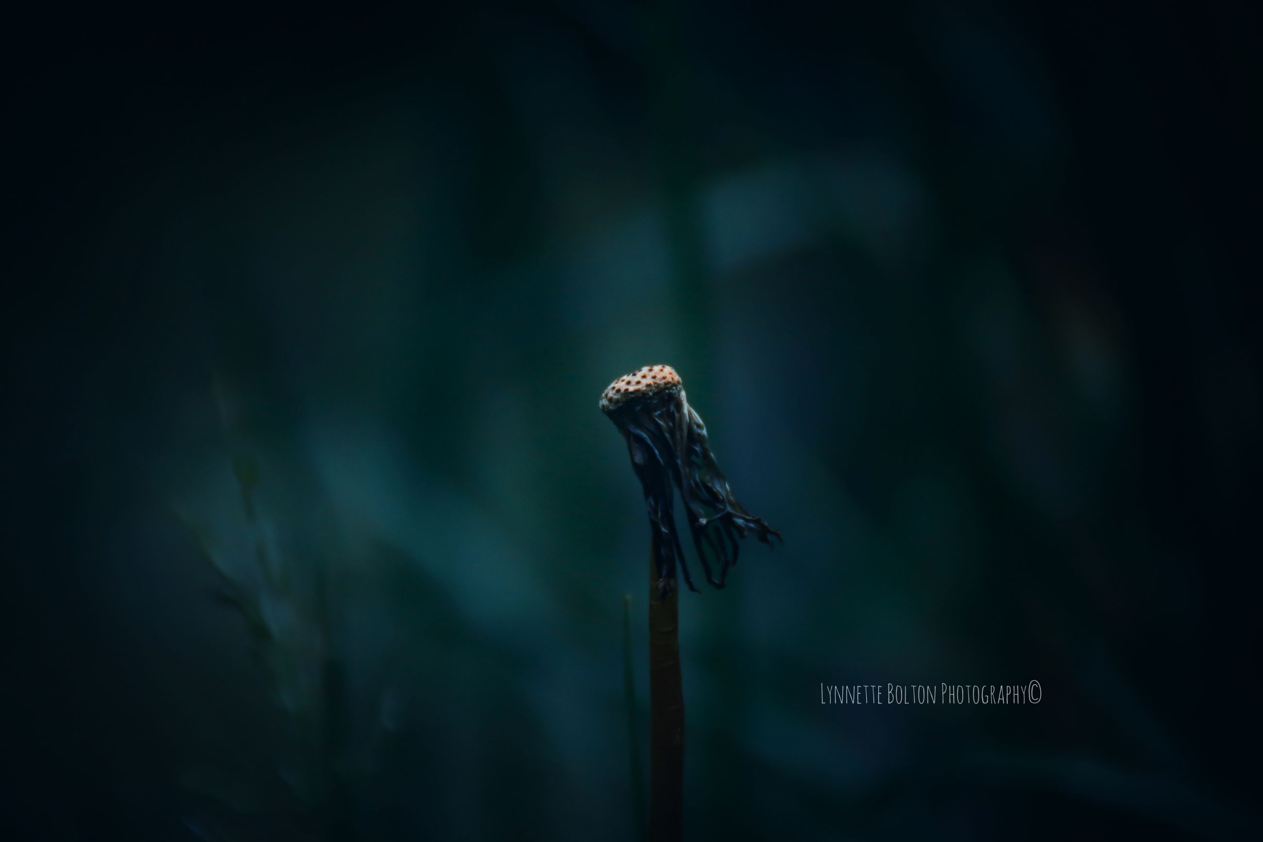 focus on foreground, close-up, plant, no people, nature, growth, beauty in nature, day, vulnerability, fragility, flower, outdoors, animal wildlife, plant stem, white color, dry, animals in the wild, tranquility, flowering plant, wood - material, wilted plant