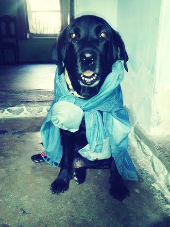 Myclick💚 Animallovers Vijendrapaliwla Lovepet♥ Mydog♥ Udaipur Udaipur. India