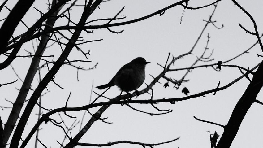 A WINTER STROLL - Birds Black And White Silhouette Nature Winter Solace Peaceful