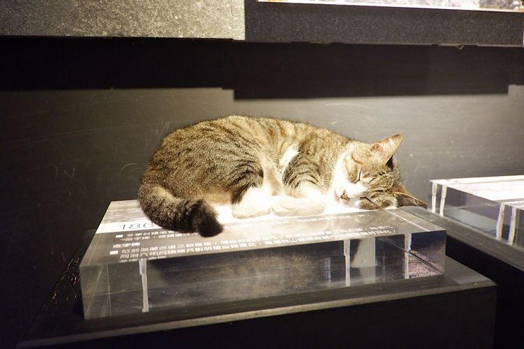 Sleeping cat Cat Village Taiwan Cat Travel Aroundtheworld Mammal Animal Themes Cat Feline Animal Domestic Cat Pets One Animal Domestic Animals Indoors  Relaxation No People Resting Eyes Closed  Sleeping Side View Lying Down Vertebrate