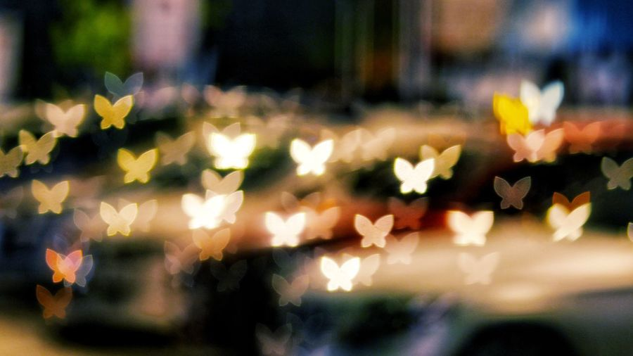 Close-up of christmas flowers at night