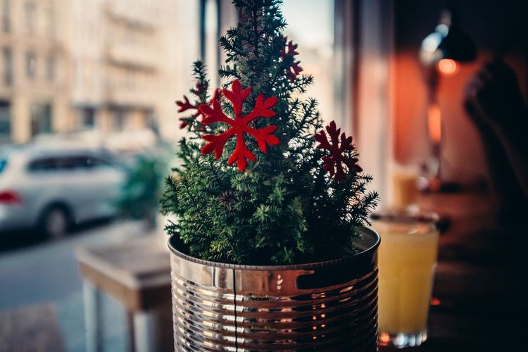 Christmas everywhere Botany Christmas Christmas Decorations Christmas Tree Cultures Decoration Depth Of Field Flower Flower Pot Fragility Green Green Color Growing Growth Leaf Occupation Plant Potted Plant Selective Focus Star Stem Tree Trees Variation Xmas