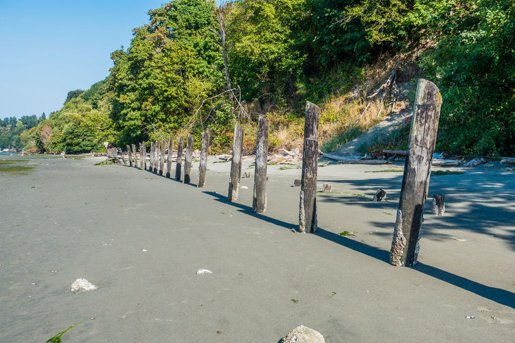 Old pilings line the shore at Dash Point, Washington. Washington State Adventure Dash Point Direction Environment Freedom Growth Individuality Land Nature Opportunity Outdoors Park People Pilings Plant Positive Emotion Road Row Shadow Sunlight Transportation Tree Water