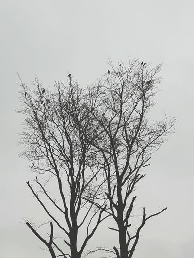 No People Nature Scenics Bare Tree Cloud - Sky Silhouette Tranquility Winter Birds In Tree Birds Vogel Baum