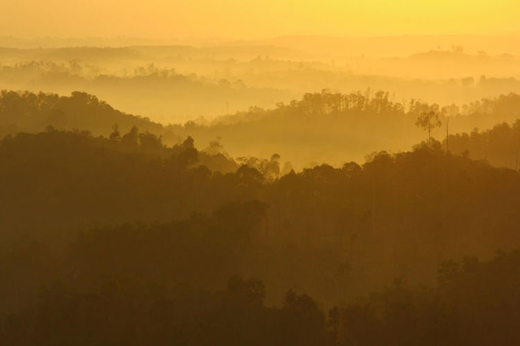 Misty morning golden hour Borneo INDONESIA Beauty In Nature Environment Fog Golden Hour Hazy  Idyllic Jungle Land Landscape Layers Morning Nature No People Outdoors Plant Scenics - Nature Sky Sunrise Sunset Tranquil Scene Tranquility Tree Tropical Climate