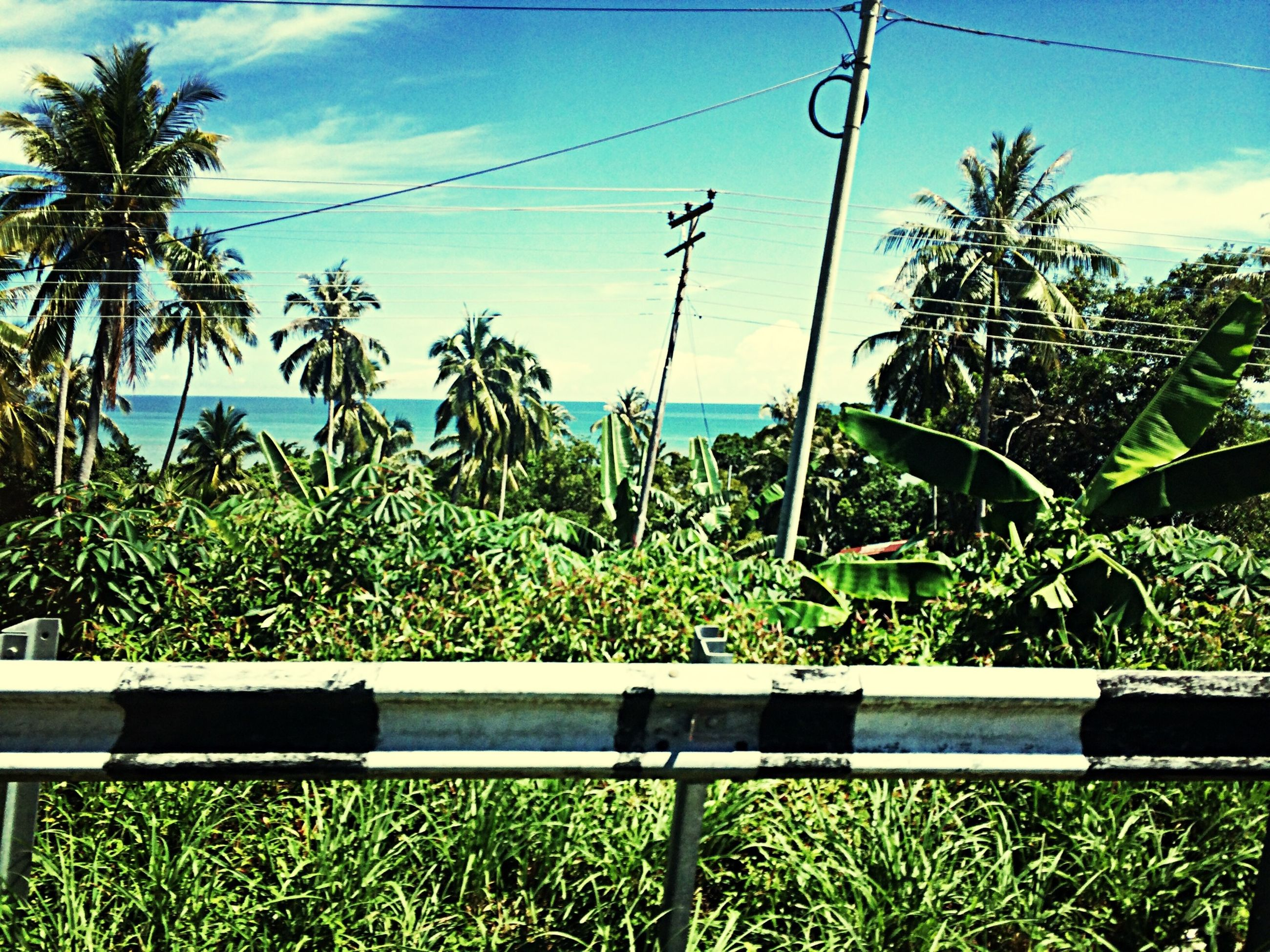 growth, plant, sky, sea, palm tree, horizon over water, green color, nature, tree, tranquility, tranquil scene, beauty in nature, blue, water, scenics, growing, green, grass, cloud, day