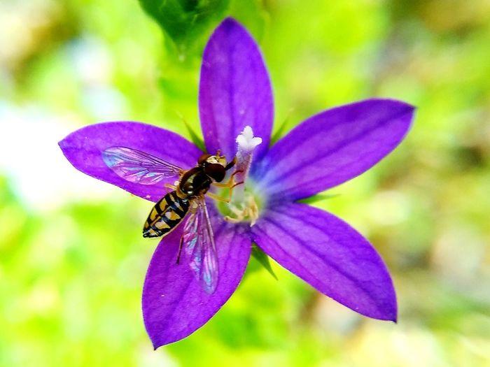 Pollination...