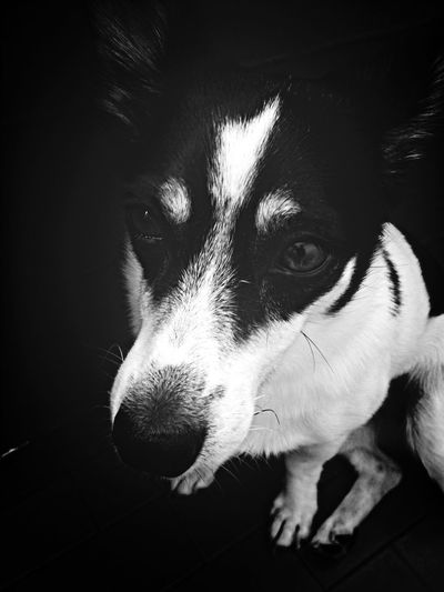 Ninetta ? Dog Cane Jackrussell Puppy