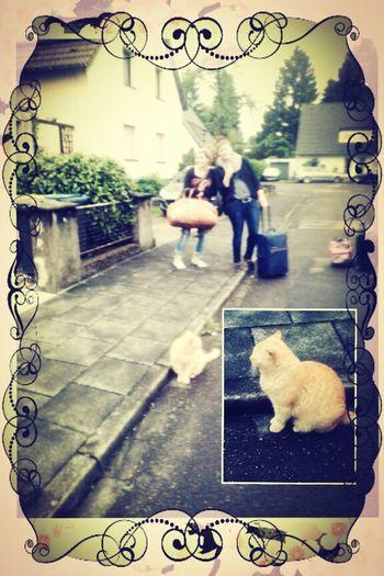 Fat Cat/ Garfield 2.0